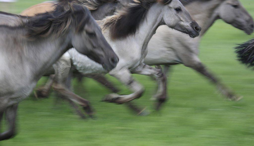 pferde-duelmen-01.JPG