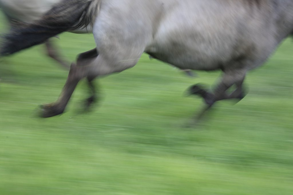 pferde-duelmen-02.JPG