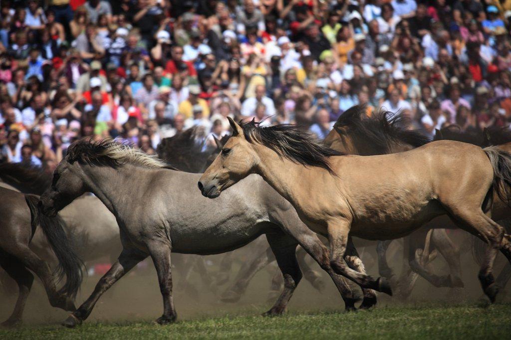 pferde-duelmen-04.JPG