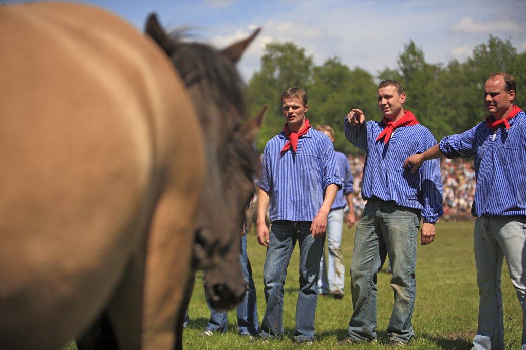 pferde-duelmen-07.JPG